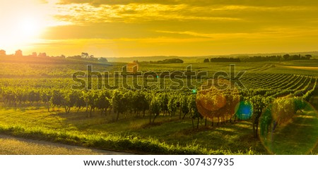Vineyard Sunrise - Bordeaux Vineyard-France, Aquitaine, Gironde, 33, Targon. - stock photo