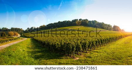 Vineyard Sunrise-Vineyards of Saint Emilion, Bordeaux Vineyards - stock photo