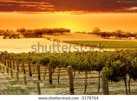 Vineyard Sunset in the Barossa Valley - stock photo
