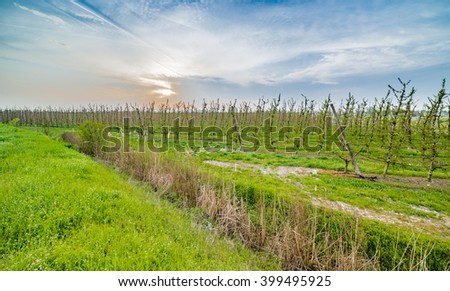 vineyard surrounded by a ditch in the countryside of Emilia Romagna in Italy