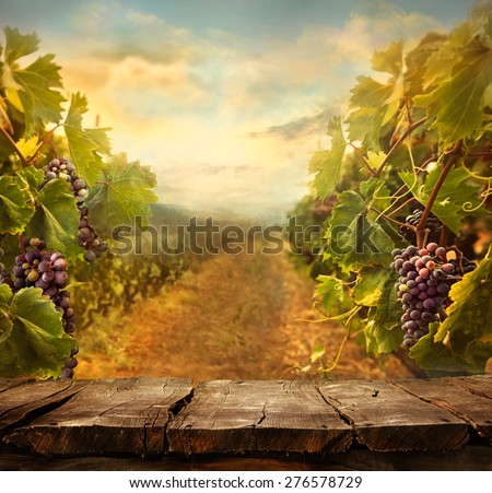 Vineyard tabletop design. Wine background. Autumn design with vineyard and empty display.  Autumn grapes harvest - stock photo