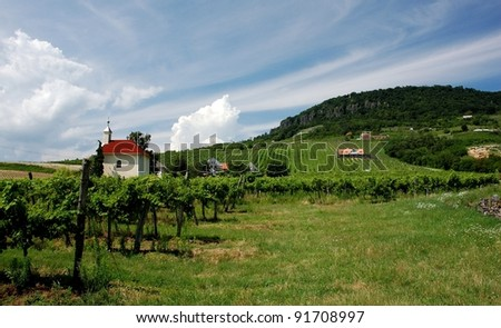 Vineyard under hill near Balaton lake - favorite holiday place in Europe - stock photo
