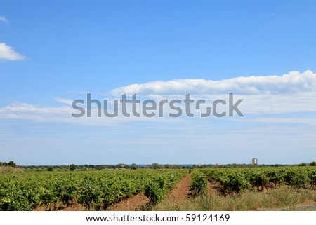 Vineyard with beautiful sky and clouds in the south of France - stock photo