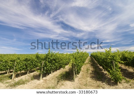 vineyard with clouds in Rioja - stock photo