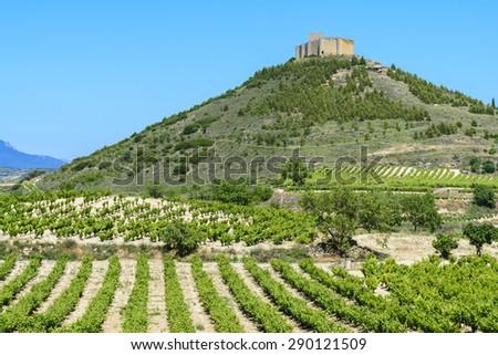 Vineyard with Davaillo castle as background, La Rioja - stock photo