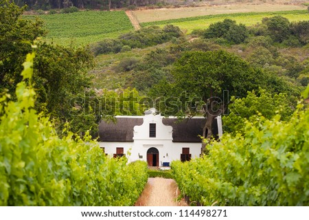 Vineyard with dutch colonial style farm house in South Africa's wine area