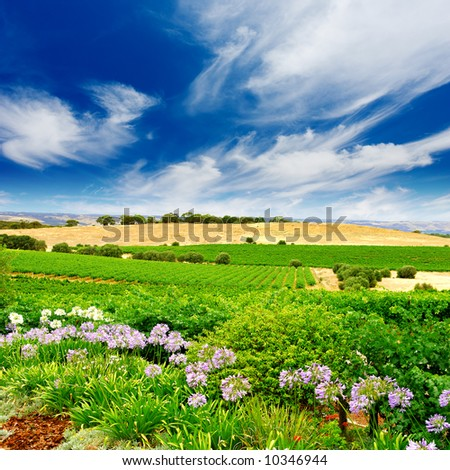 Vineyard with flowers in the foreground - stock photo
