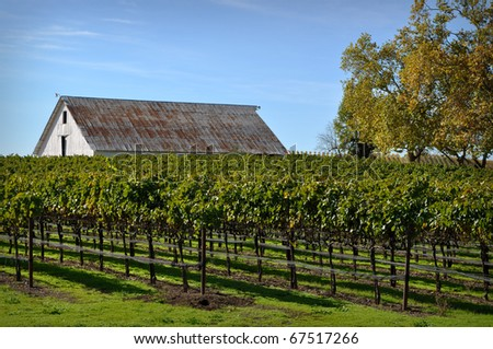 Vineyard with Old Barn - stock photo