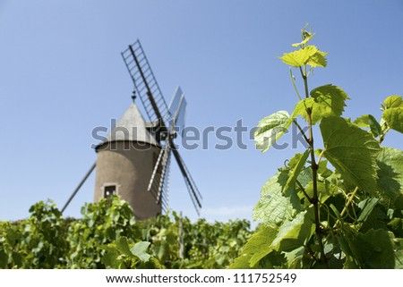 Vineyard, with old windmill, Moulin A Vent from Beaujolais. France.