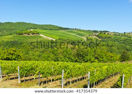 Vineyard with Ripe Grapes in the Autumn  - stock photo