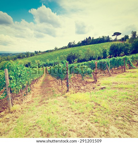 Vineyard with Ripe Grapes in the Autumn in Italy, Vintage Style Toned Picture - stock photo