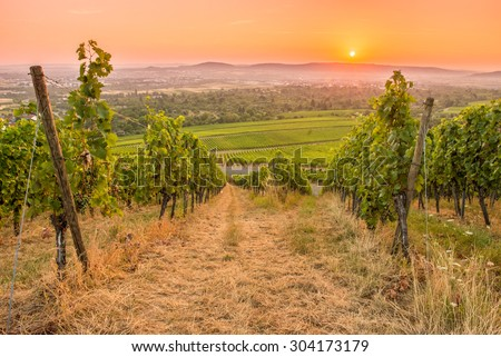 Vineyard with sun in the orange and red sky