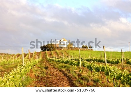 Vineyard with vine sprigs in Portugal in springtime