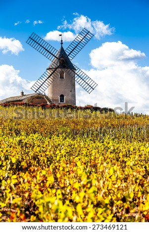 vineyard with windmill near Chenas, Beaujolais, Rhone-Alpes, France - stock photo