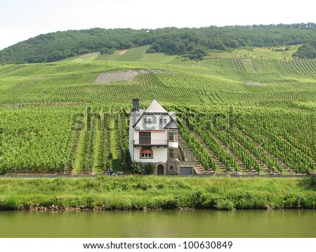 Vineyards along Moselle river, Germany