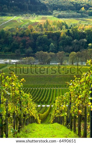 vineyards and forest along the mose riverl in germany - stock photo