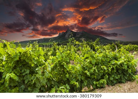 Vineyards and mountains on the background of dramatic sunset. - stock photo