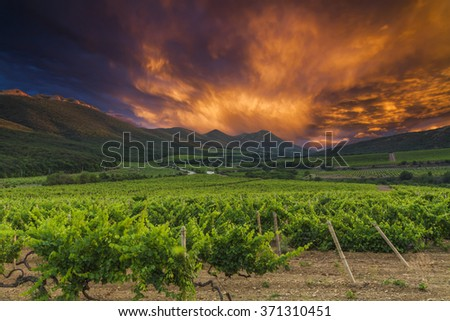 Vineyards and mountains on the background of of dramatic sunset. - stock photo