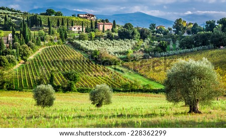 Vineyards and olive trees in a small village, Tuscany - stock photo