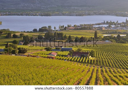 Vineyards and Orchards in Osoyoos, Okanagan Valley - stock photo