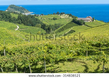 Vineyards and wine cellar with the Cantabrian sea in the background, Getaria (Spain)  - stock photo