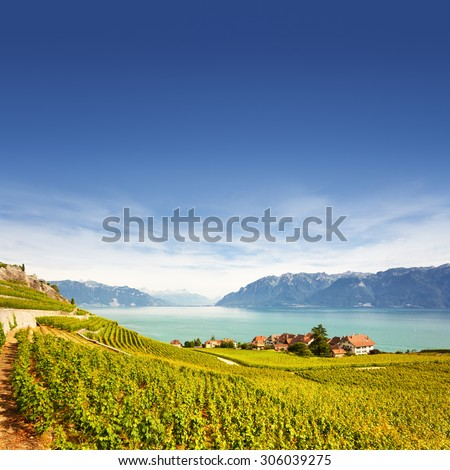 Vineyards at Geneva lake in Lavaux area, Switzerland - stock photo