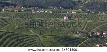 Vineyards at Skalce, Slovenske Konjice, Slovenia