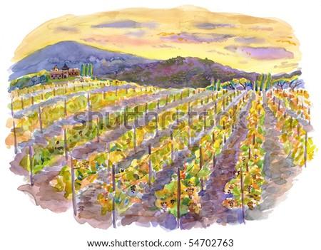 Vineyards at sunset. Watercolor. - stock photo