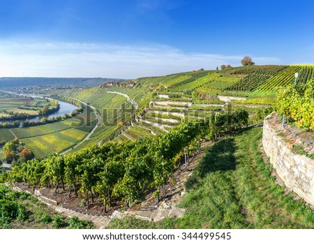 Vineyards at the river Neckar in the sunny autumn in Germany - stock photo