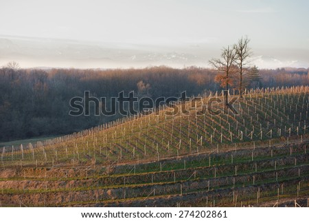 vineyards at winter time in Piedmont, Italy - stock photo