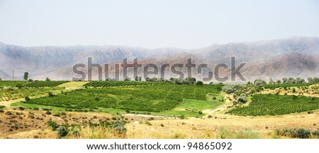 Vineyards in Armenian mountain countryside.
