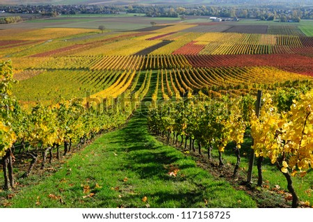 Vineyards in autumn colors. The Rhine valley, Germany - stock photo
