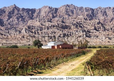 Vineyards in Cafayate, Argentina - stock photo