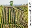 vineyards in Cejkovice region, Czech Republic - stock photo