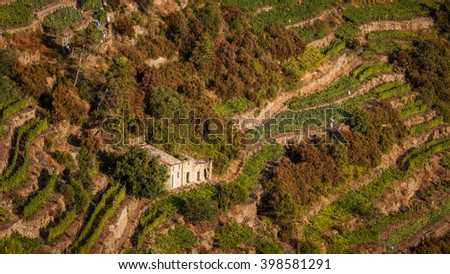 Vineyards in Cinque Terre with the famous terraces built on the rugged and steep hills overlooking the sea. Italy, Unesco World Heritage Site - stock photo