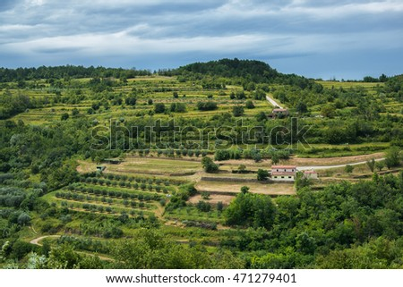 Vineyards in Croatia countryside