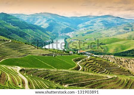Vineyards in Douro Valley, Portugal, Portuguese port wine - stock photo