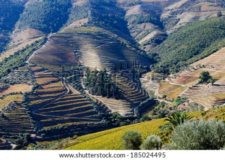Vineyards in Douro Valley,Portugal. UNESCO  World Heritage Site - stock photo