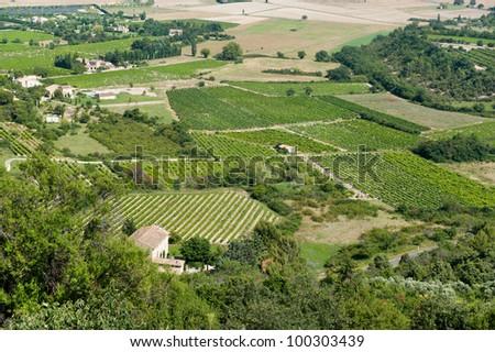 Vineyards in French landscape near Gordes - stock photo