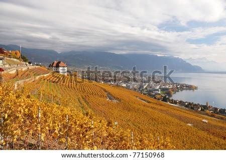 Vineyards in Lavaux along Geneva lake, Switzerland - stock photo