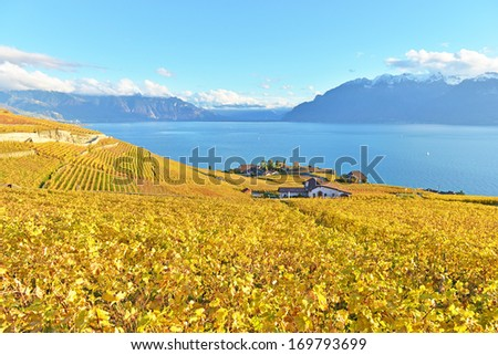 vineyards in Lavaux region against leman lake - stock photo