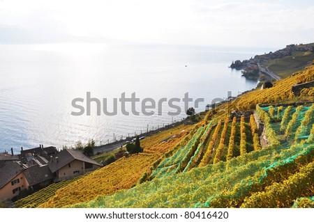 Vineyards in Lavaux region at Geneva lake, Switzerland - stock photo