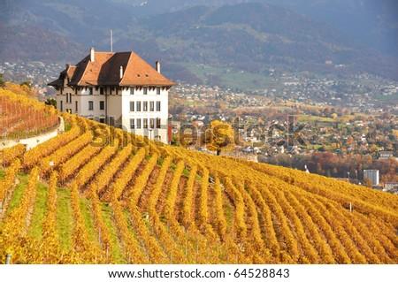 Vineyards in Lavaux region, Swittzerland - stock photo