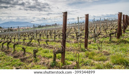 Vineyards in Lavaux region, Switzerland - taken at early Springtime - stock photo