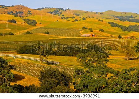 Vineyards in Napa Valley at sunset - stock photo