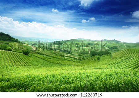vineyards in Piedmont, Italy - stock photo
