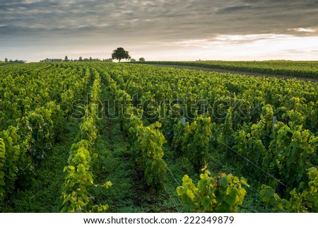 Vineyards in Pommard, near  Beaune, Burgundy, France - stock photo