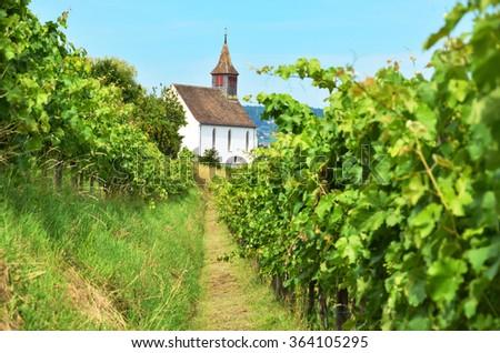Vineyards in Rheinau, Switzerland - stock photo