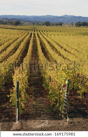 Vineyards in Russian River Valley, CA - stock photo
