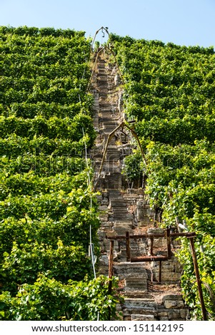 Vineyards in Stuttart - Bad Cannstatt: Very steep hills along river Neckar that can only be properly serviced using a lift - stock photo